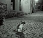 """basiakosciak """"nocne schadzki"""" (2008-11-14 23:28:02) komentarzy: 5, ostatni: kadr jak najbardziej OK, fajne zdjęcie!"""