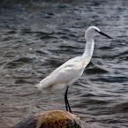 """Wojciech Haręża """"w jeziorze wiktorii"""" (2008-11-16 09:36:47) komentarzy: 1, ostatni: fajne ptaszysko"""