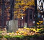 """dogfog """"Ku pamięci..."""" (2008-11-18 17:41:24) komentarzy: 8, ostatni: Pięknie"""