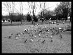 """shenice """"..."""" (2008-11-18 23:44:01) komentarzy: 1, ostatni: Gdyby w srodku golebi bylo ostro , bylby to dosc ciekawy efekt przedstawiajacy dramatyzm. Z racji ze ja nie trawie golebi , podobalo by mi sie."""