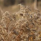 """rudamary """"jesień"""" (2008-11-19 15:20:17) komentarzy: 8, ostatni: fajne trawsko troche rozczochrane zbytnio pozdrowki !!!"""