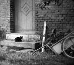 """dogfog """"ostra wycieraczka..."""" (2008-11-21 16:51:09) komentarzy: 19, ostatni: Daraya, juz oderwałeś?? :))))))))"""
