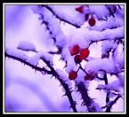 """shenice """"przyszła..."""" (2008-11-21 19:44:15) komentarzy: 9, ostatni: Ciekawy kontrast wody i sniegu , tlo ladnie komponuje sie z reszta. Kolor sniegu - kwestia gustu. Najwazniejsze ze eksperymentujesz."""