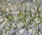 """jarszu """""""" (2008-11-22 13:47:45) komentarzy: 11, ostatni: oj dobrze że zima sobie poszła ale zdjecie piekne"""