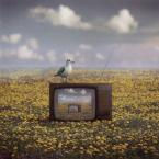 """klimat """""""" (2008-11-24 14:01:29) komentarzy: 51, ostatni: program dla rolników"""