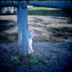 """kamron """""""" (2008-11-26 22:07:33) komentarzy: 13, ostatni: Pau, jestemże ja już! Się mi widzi :)"""