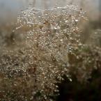 """Ravkosz """"jesienność ... #4"""" (2008-12-01 21:10:58) komentarzy: 7, ostatni: ok"""