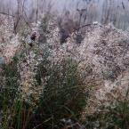 """Ravkosz """"jesienność ... #5"""" (2008-12-01 21:12:04) komentarzy: 6, ostatni: kiepsko rowniez... (gwoli podtrzymania renomy odwetowca)"""