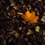 """Jeremi12 """"Koniec jesieni?"""" (2008-12-02 21:55:42) komentarzy: 7, ostatni: elegancko"""