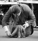 """sandiego """"u fryzjera..."""" (2008-12-03 12:45:31) komentarzy: 12, ostatni: Świetnie złapame.Pozdrowienia"""