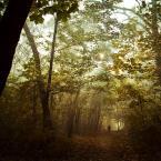 """DELF """"jesień życia"""" (2008-12-05 18:43:49) komentarzy: 12, ostatni: klimat db."""