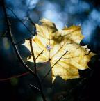 """irmi """""""" (2008-12-06 17:54:40) komentarzy: 2, ostatni: ...to juz ostatni jesienny lisc zapewne,dobry kadr..."""