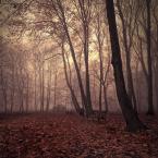 """DELF """"nature sounds"""" (2008-12-08 20:10:13) komentarzy: 37, ostatni: klimacik niezly"""
