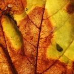 """Piowa """"ELementy 3"""" (2008-12-09 14:49:29) komentarzy: 2, ostatni: Warto iść w tym kierunku: detale, kolory , faktury"""