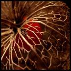 """BiTi """"jesień"""" (2008-12-12 13:18:00) komentarzy: 17, ostatni: Koronkowa robota"""