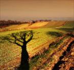 """Steven M. """"Drzewa ślad"""" (2008-12-12 19:00:22) komentarzy: 16, ostatni: południcowe jakieś takie."""