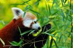 """kovalphoto """"...."""" (2008-12-12 19:09:26) komentarzy: 3, ostatni: wprawdzie to tylko zoo ale kolory i ostrość bdb."""