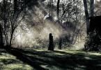 """innaryba """"........."""" (2008-12-12 21:14:04) komentarzy: 15, ostatni: pięknie :)"""