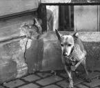"""dogfog """"..."""" (2008-12-15 18:54:38) komentarzy: 17, ostatni: Fanaa, nie! Jakbym mógł?! tylko przechodziłem, jego Pan robił w tym czasie zakupy:)"""