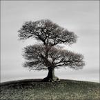 """fifka """"Drzewo"""" (2008-12-19 00:08:13) komentarzy: 28, ostatni: interesujące"""