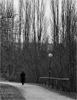 """robsson """"aleja cieni"""" (2008-12-20 22:47:09) komentarzy: 2, ostatni: nastrojowe szarości"""