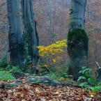 """amator_sliwek """"nie dac sie zimie"""" (2008-12-23 20:52:36) komentarzy: 4, ostatni: urokliwe-""""złote"""" drzewko..."""