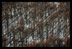 """Mariusz Ś """"Bieszczadzkie wędrówki XXIV"""" (2008-12-26 13:04:01) komentarzy: 13, ostatni: dobra robota"""