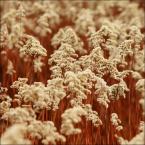 """fifka """"Jesiennie"""" (2008-12-28 21:18:40) komentarzy: 3, ostatni: zaskoczyles mnie kolorem, a on jest drazniacy i ciekawy.."""
