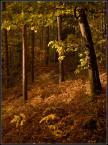 """kariola """"Obrazki ze Starej Baśni ..  trzeci"""" (2008-12-30 18:44:15) komentarzy: 32, ostatni: Piękne te odcienie żółci, pozdrawiam :)"""