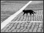 """detective """"Kot chadza własnymi ścieżkami..."""" (2009-01-02 21:04:29) komentarzy: 14, ostatni: świetne"""