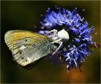 """Adam Pol """"Były dwa motyle"""" (2009-01-04 23:16:05) komentarzy: 28, ostatni: wow!"""