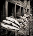"""wizental """"normalnie rybka sama się sprzedaje  : )"""" (2009-01-08 20:20:42) komentarzy: 32, ostatni: dobre!"""