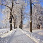 """Steven M. """"Zima"""" (2009-01-09 08:34:41) komentarzy: 7, ostatni: Bardzo ładnie biel zbalansowana, oczy biegną szpalerem drzew - w nieznane..."""
