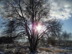 """Dicky """"uroki zimy w słońcu"""" (2009-01-09 11:34:49) komentarzy: 3, ostatni: prawie dobrze, można by odejśc spora odległość od drzewka i dopiero wtedy walnąć kadr"""