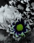 """mario1972 """"Kwiaty dla Kasi"""" (2009-01-09 14:56:00) komentarzy: 5, ostatni: Na PE lepiej się prezentuje. Dobrze skomponowałeś, aczkolwiek obróbka niekoniecznie w moim guście :)."""