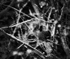 """LeStator """"impresja zimowa z ptaszkiem..."""" (2009-01-10 01:56:51) komentarzy: 14, ostatni: Gruba fota. Może o jeden filtr za daleko, ale podoba mi się."""