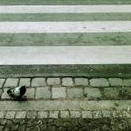 """bubblegun """"przyczajony gołąb, ukryta zebra"""" (2009-01-12 17:07:09) komentarzy: 6, ostatni: ehehhehe opis świetny"""