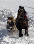 """Ronceval """"W co się bawić ?"""" (2009-01-13 20:46:23) komentarzy: 19, ostatni: Zdjecie jest wspaniale!!! a ten chlopak na zdjeciu to moj braciszek Andrzej Babiarz, kon nazywa sie Devon Dzekuje! brak slow..."""