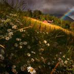 """Borkosia """""""" (2009-01-17 16:07:38) komentarzy: 86, ostatni: leżeć z trawie...."""