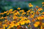 """Kriss@Art """"Za domem..."""" (2009-01-17 19:39:49) komentarzy: 1, ostatni: Szkoda że tyle kwiatów było pousychanych :( Ale ogólnie ok"""