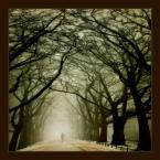 """Wołodytjowski """"Tam daleko, za mgłą..."""" (2009-01-18 20:33:20) komentarzy: 43, ostatni: wspaniałe..."""