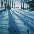 """kamron """""""" (2009-01-18 20:33:42) komentarzy: 12, ostatni: moze to bedzie marudzenie, ale dl amnei za neibiesko"""