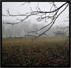 """grocek """""""" (2009-01-25 14:09:48) komentarzy: 3, ostatni: Styczeń, a wygląda tak jesiennie i listopadowo. Bardzo nastrojowe"""
