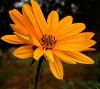 """zippuro """"byle do wiosny)"""" (2009-01-26 10:35:16) komentarzy: 5, ostatni: za AidanFrost"""