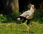 """kovalphoto """"ptasiek"""" (2009-01-26 20:22:43) komentarzy: 6, ostatni: gdybyś nie napisał że to zoo to nikt by się nie domyślił."""