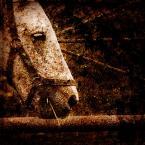 """Tarantella """"zapach ziemi"""" (2009-01-29 09:14:10) komentarzy: 0, ostatni:"""
