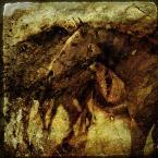 """Tarantella """"zapach ziemi"""" (2009-01-29 09:15:31) komentarzy: 10, ostatni: kawa ....expresso. pyszna fotografia"""