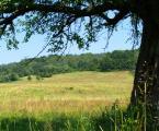 """Maciek Froński """"Wołowiec"""" (2009-02-02 14:32:28) komentarzy: 5, ostatni: To pewnie dlatego, że chciałem pokazać gałęzie, w końcu las jak las..."""