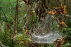 """zippuro """"w pajęczą sieć uwikłany..."""" (2009-02-02 18:02:33) komentarzy: 4, ostatni: rozumiem Aidan że stosowniej byłoby oddzielic chwasty od ziół i traw ustawić blende do cudownego oświetlenia a pochowane zwierzaki równiutko od najmniejszego w dwuszeregu zbiórka...)"""