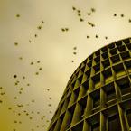 """Carlos Gustaffo """"pszczoły"""" (2009-02-03 01:29:15) komentarzy: 24, ostatni: Bardzo mi pasi to zdj! Super!"""